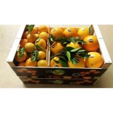 Caja Mixta Naranja Navel Late /Mandarina Gold Nugget 10Kg