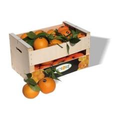 Naranjas Navelinas de 15 Kg Aprox.